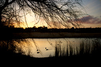 Radipole Lake Sunset